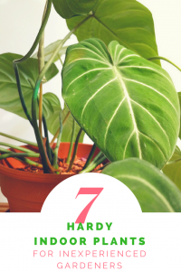 7 Hardy Indoor Plants for Inexperienced Gardeners - Discover 7 easy to care for indoor plants that even YOU can keep alive! | https://heartenedhome.com