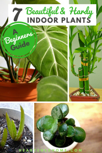 7 Beautiful & Hardy Indoor Plants for Beginners - Discover 7 easy to care for indoor plants that even YOU can keep alive! | https://heartenedhome.com  #indoorplants #hardyplants #gardening #homedecor #greenhome