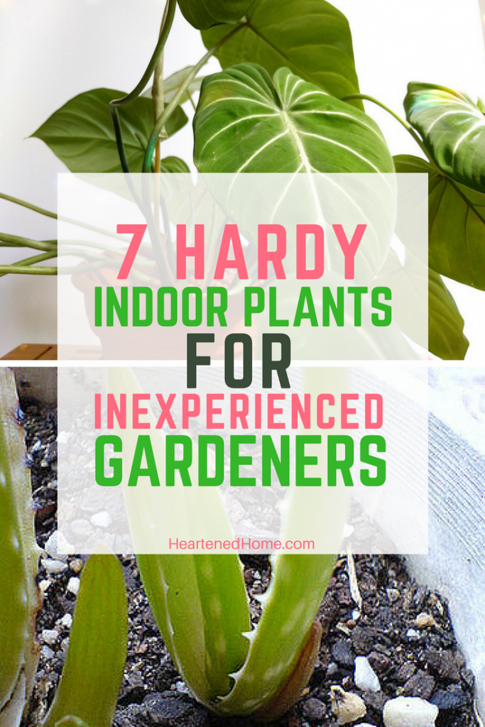 7 Hardy Indoor Plants for Inexperienced Gardeners