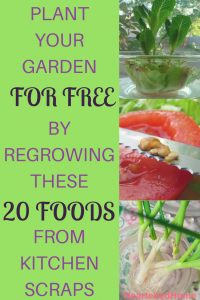 Plant Your Garden for Free by Regrowing These 20 Foods from Kitchen Scraps - No need to buy seeds or seedlings to start a garden, simply save and propagate your kitchen scraps! Learn how with examples here! | https://heartenedhome.com